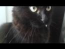 Мой кот Боня №3