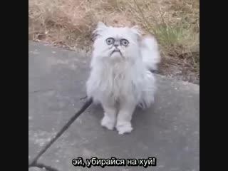 Blink, motherfucker (rus sub)