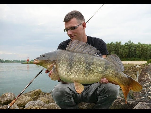 ВОТ КАК МОЖНО ЛОВИТЬ НА МИКРОДЖИГ Рыбалка на Спиннинг Ловля Окуня на Джиг смотреть онлайн без регистрации