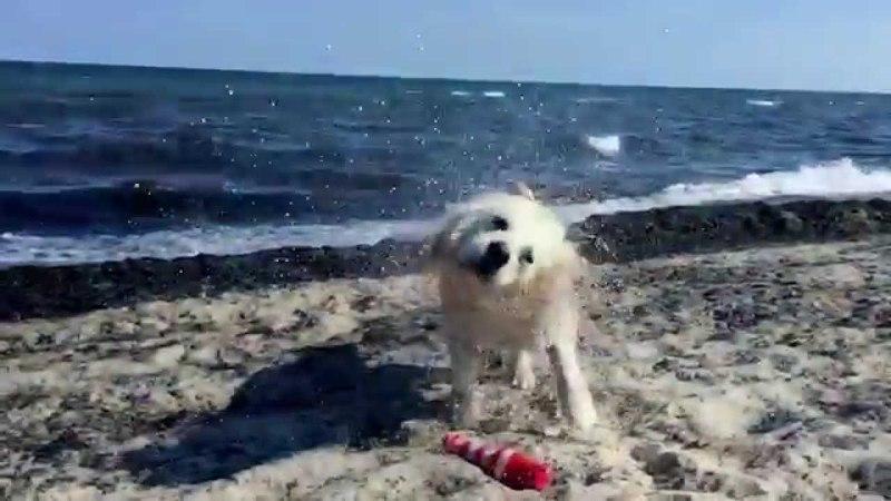 Hund schüttelt sich nach dem Baden Slow Motion 240fps Zeitlupe 720p