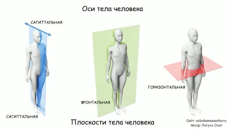 Послойное расположение мышц. Оси и плоскости тела.