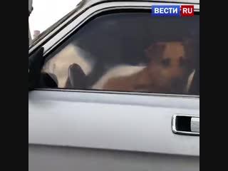В Москве прохожие не дали эвакуировать машину с собакой внутри