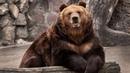Картинка животное. Животное, бревно, хищник, стены, зоопарк, медведь, камни.