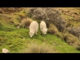 v-s.mobiLeo Rojas - Der einsame Hirte (Одинокий пастух).mp4