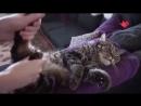 Это по-нашему страшный сон любой кошки и искрометное соло на инструменте - Москва 24