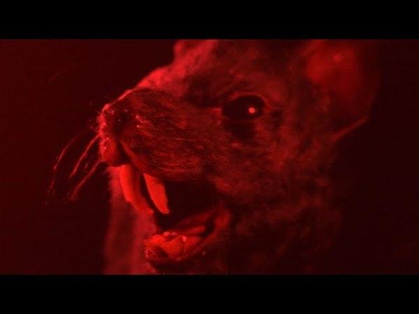 Крысы (УЖАСЫ) HD
