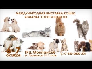 Выставка кошек 6-7 октября