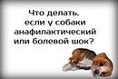 Хвостатый Копирайтер. Интересное о животных фото #8