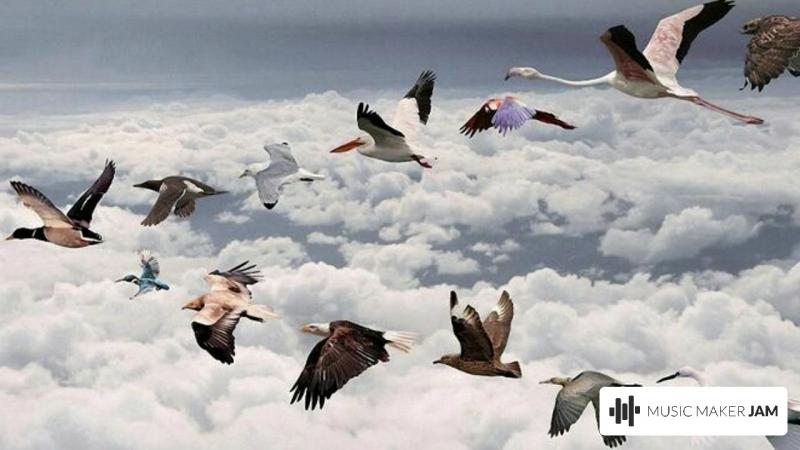 перелетные птицы.mp4