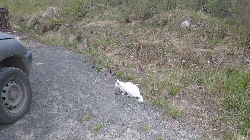 Утро 25.05.19. Томас только что поймал очередную мышь.