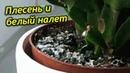 Плесень и белый налет в горшках комнатных растений. Что делать Как избавится от налета