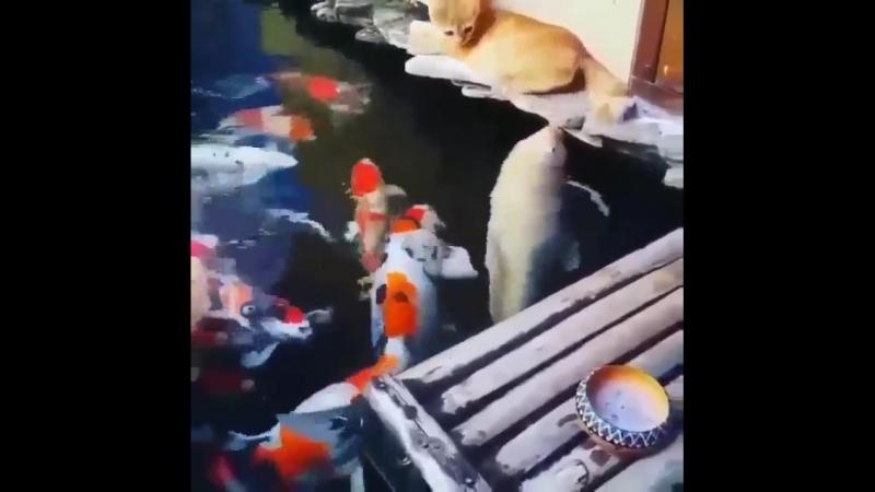 Рыбнадзор..))