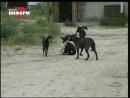 Бродячие собаки 1998 Архивы нашей памяти