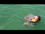 Куба. Плавание с дельфинами на Варадеро