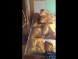 Таракан в пекарне около автовокзала Девяткино
