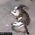 nadya_legz video