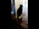 Мой кот Яша еврейский кот обиделся ему не дали котлету