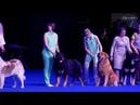 Бурят-монгольская собака. Евразия 2018