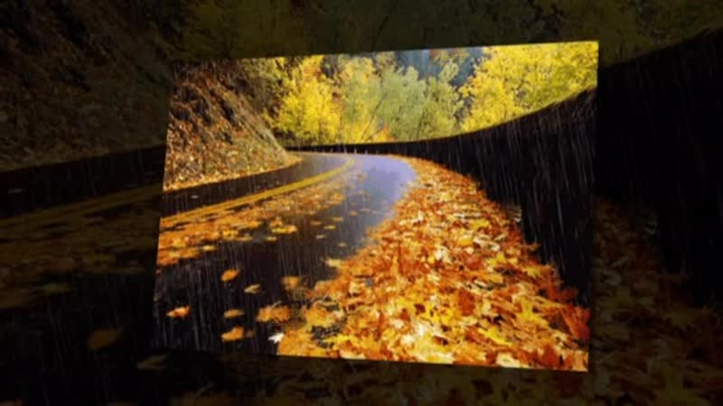 Николай Голуб — Жёлтые листья
