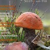 Планета грибов