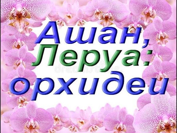 ОРХИДЕИ в АШАНЕ и ЛЕРУА,27.10.18.