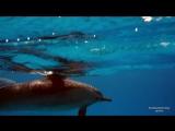 Satayah dolphins