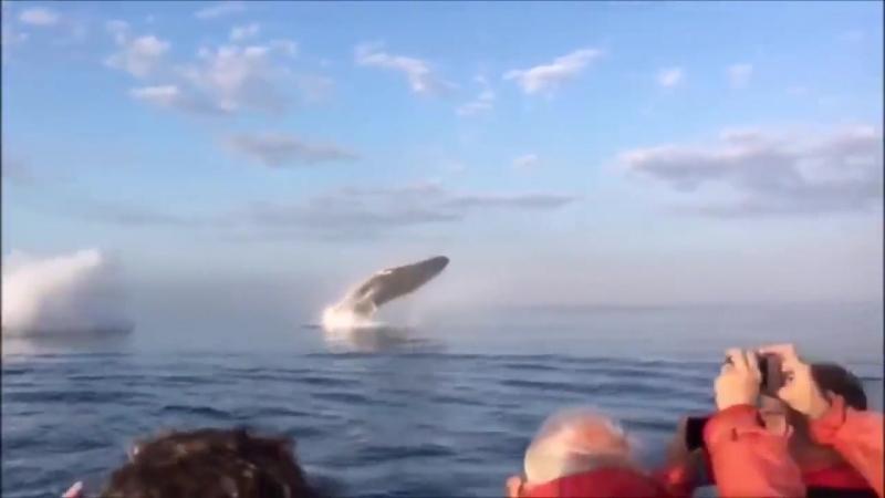 Китовое представление