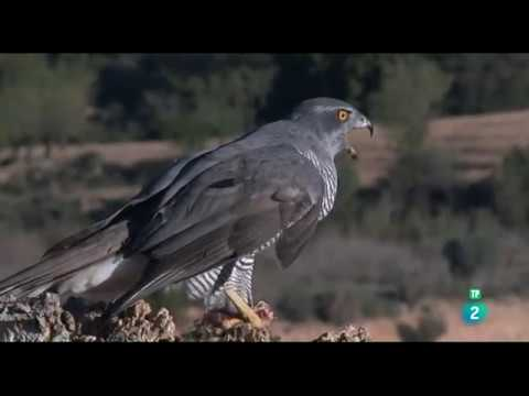 España, la Tierra Prometida Cuna de Estirpes | Documental