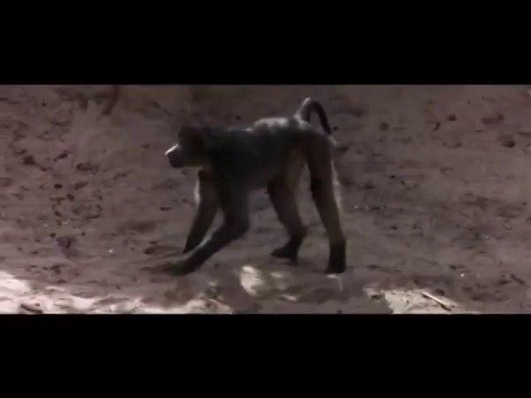 Марупа -Пьянящее Дерево Африки