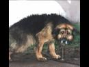 Собака просидела на цепи 10 лет