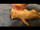 Котенок спит без задних ног Умора