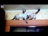 Коты нашли способ разойтись