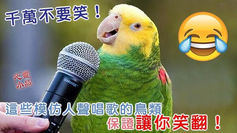 千萬不要笑!這些模仿人聲唱歌的鳥類,保證讓你笑翻! 盡量不要笑!-229