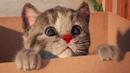 Little Kitten My Favorite Cat Play Fun Kitten Pet Care Games For Children By Fox Sheep