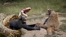 Anaconda Too Big - Anaconda Attack Monkey On Tree - What would the smart monkey look like?