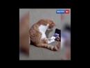 Когда кошка увидела в телефоне умершего хозяина