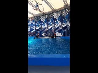 Дельфинарий в Сочи Парк Ривьера