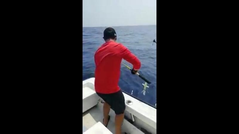 Битвы за добычу между рыбаками и акулой