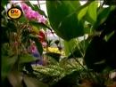 Паразиты в теле человека фильм от BBC