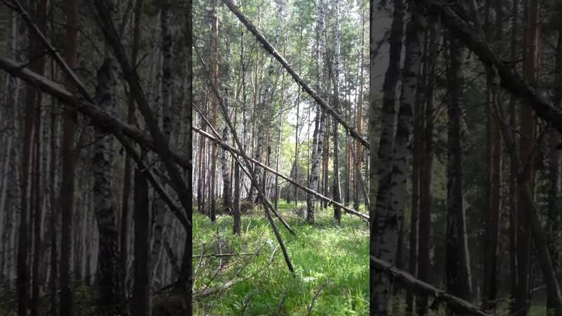 Долговские леса 11 08 2018 год