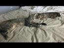 Счастливая история одной бездомной кошки!