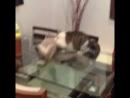 Когда твой кот профессиональный борец