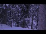 Trapper Spots Something Odd In The Bush
