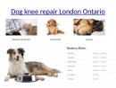 Dogs and cats care hospital london ontario, animals hospital, Veterinary hospital, animal surgery - staplesanimalhospital.co