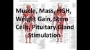 Muscle, Mass, Weight Gain, HGH, Stem Cells, Pituitary Stimulation, Bone Density, Balance,