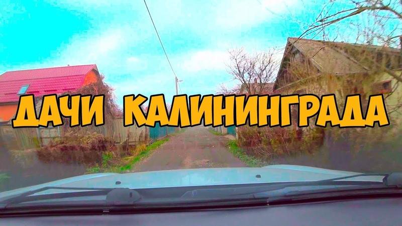 Дачи в Калининграде! Купить дачу! Жизнь на даче! СНТ, дом, прописка, дороги, заборы, грязь, собаки