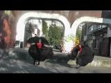 Танец Касабланка