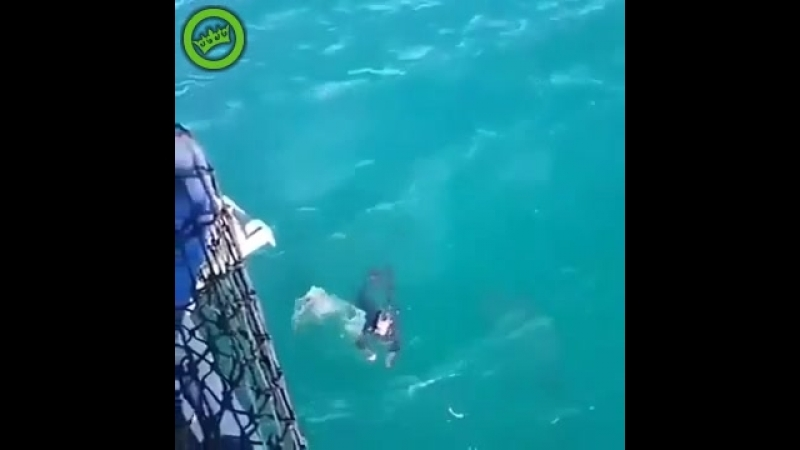 Акула чуть не скушала чувака