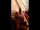 Жестокое нападение собаки на человека
