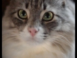Портрет моего кота